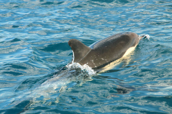See dolphins up close