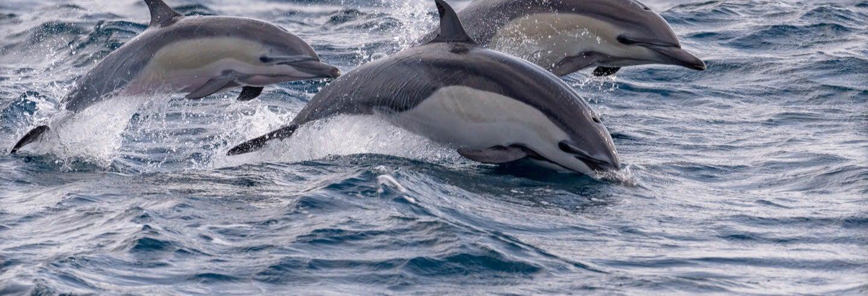Avistamiento de delfines en Portimão
