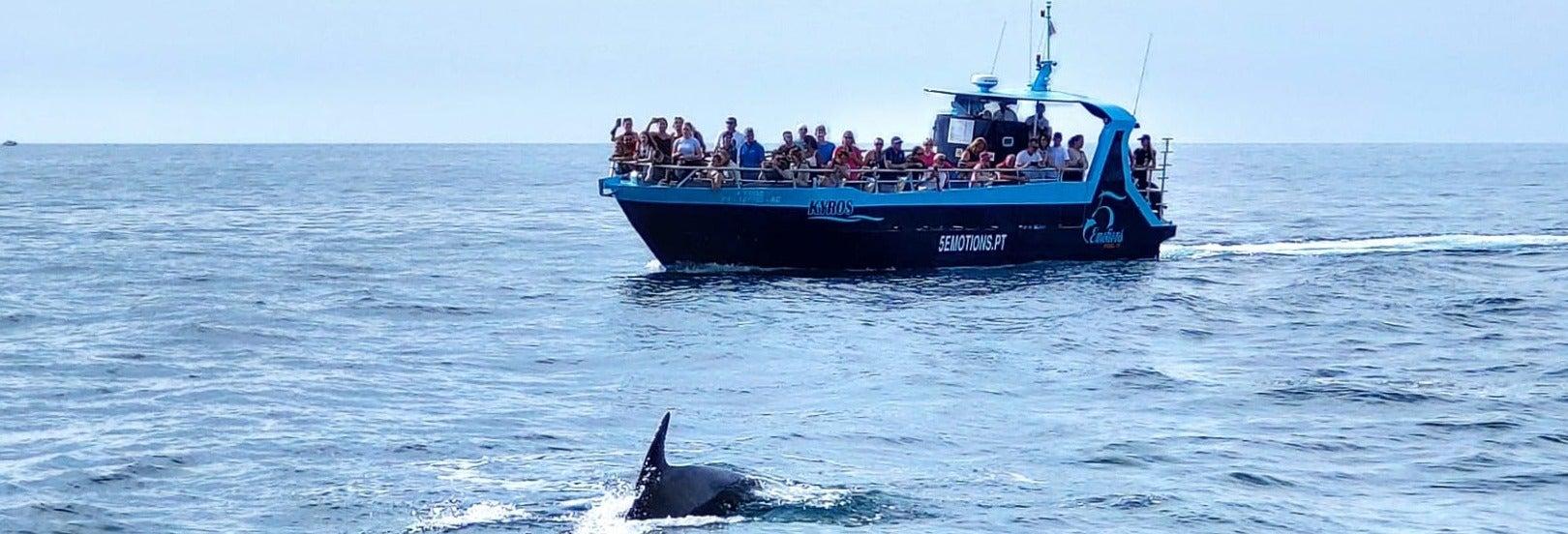 Balade en bateau aux grottes de Benagil + Observation de dauphins