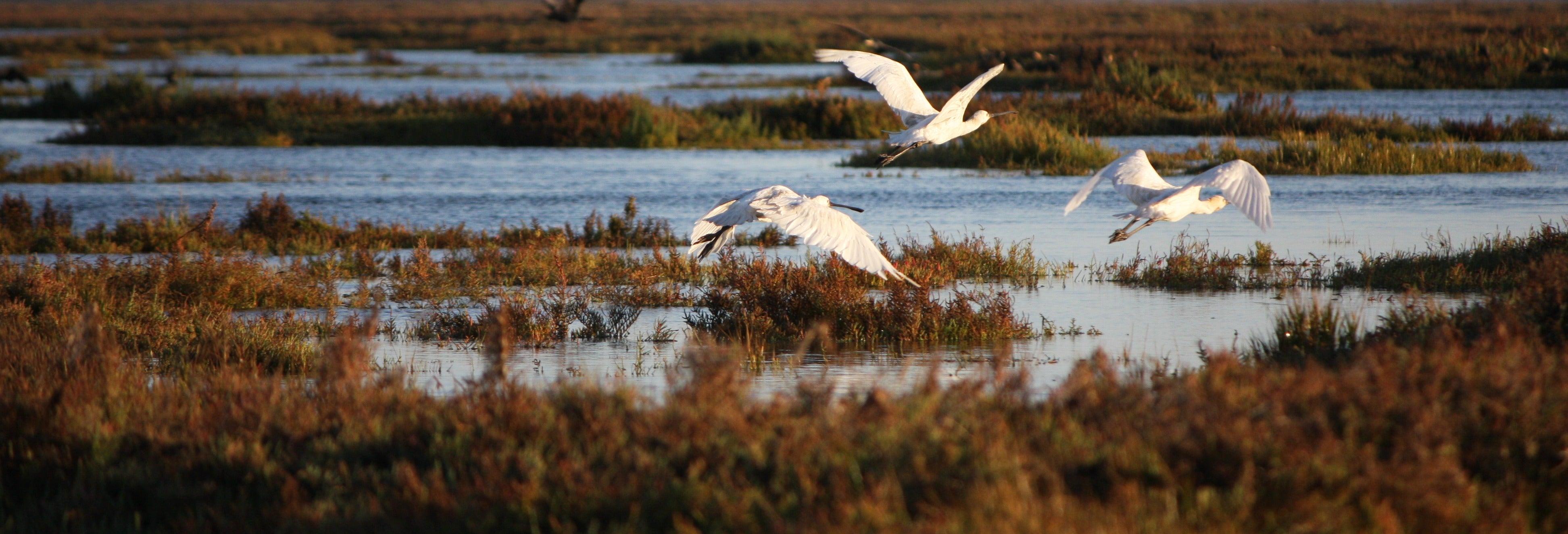 Birdwatching on Ria Formosa