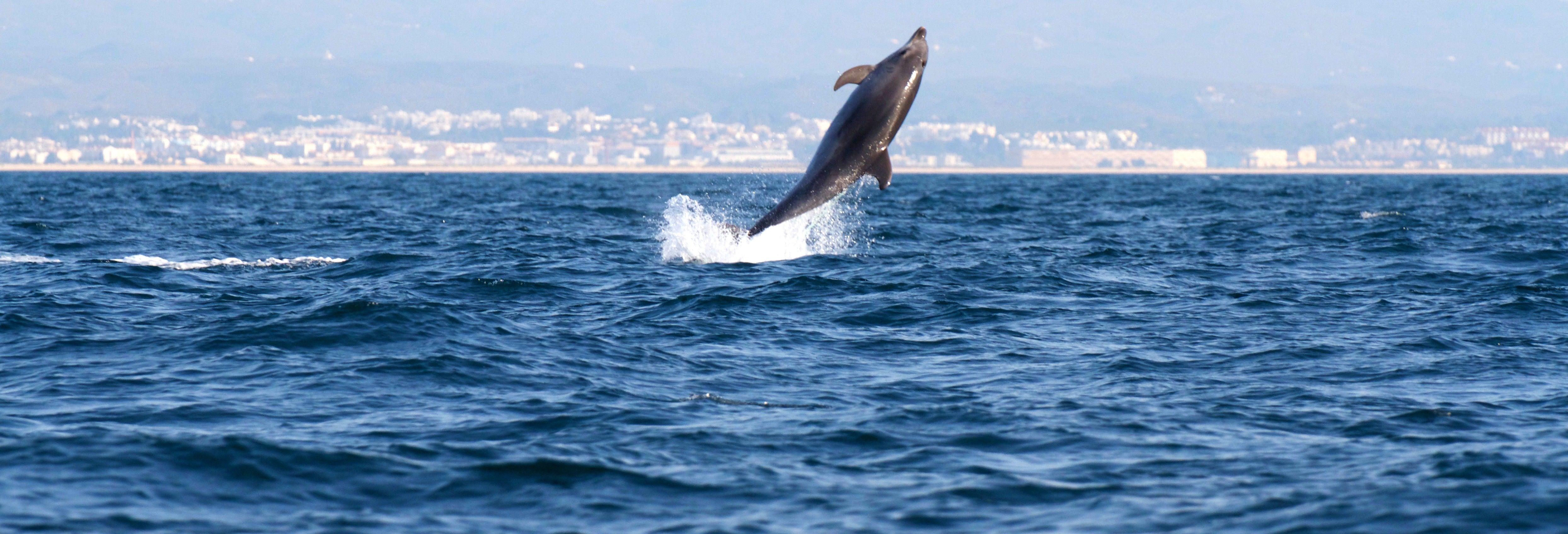 Avistamento de golfinhos em Tavira