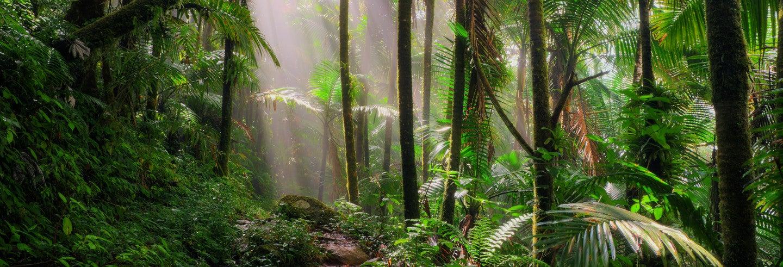 Excursión al Bosque Carite