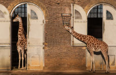 Entrada al ZSL London Zoo