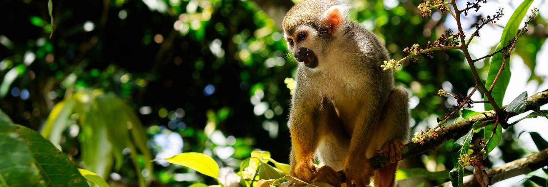 Excursión a Monkeyland