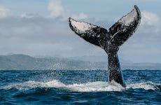 Observation de baleines à Samaná