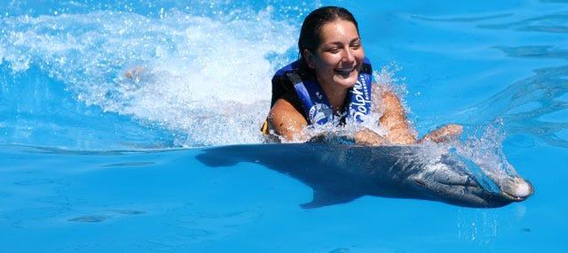 Nage avec des dauphins à Punta Cana