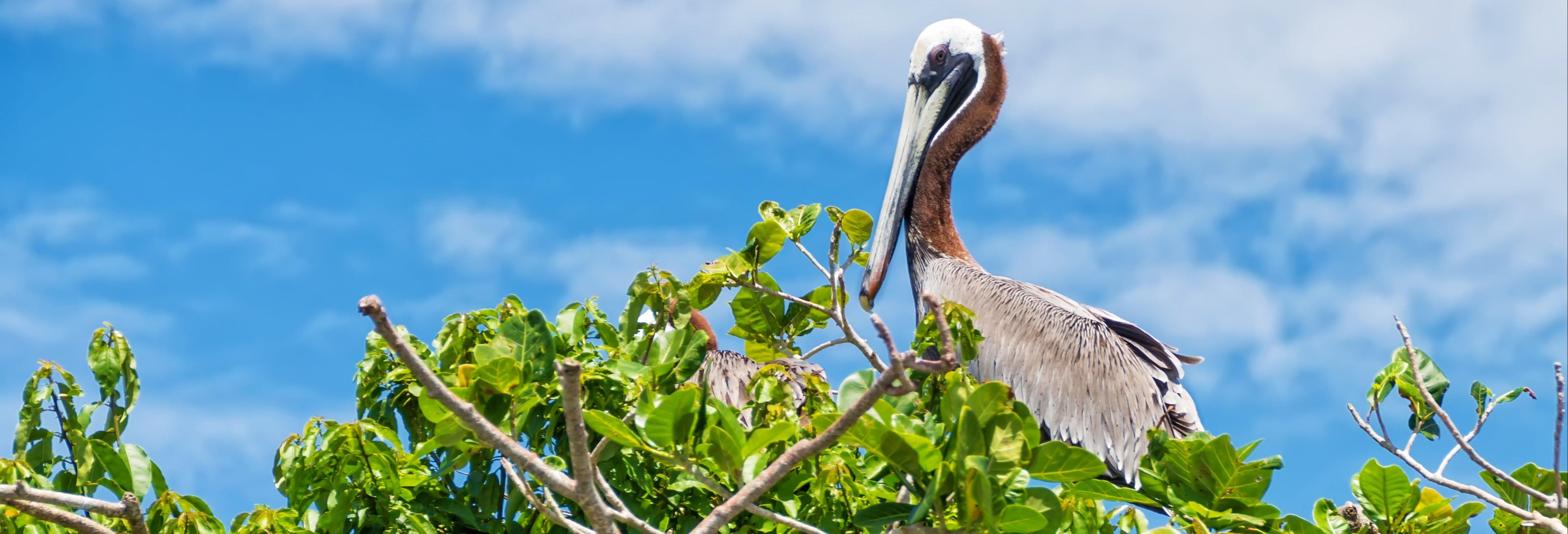Excursión al Parque Nacional Los Haitises