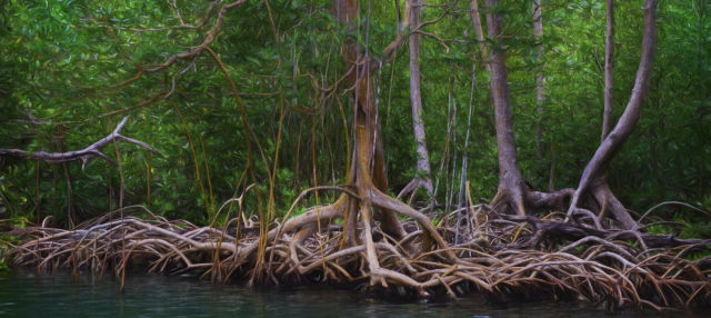 Los Haitises National Park Hiking Activity