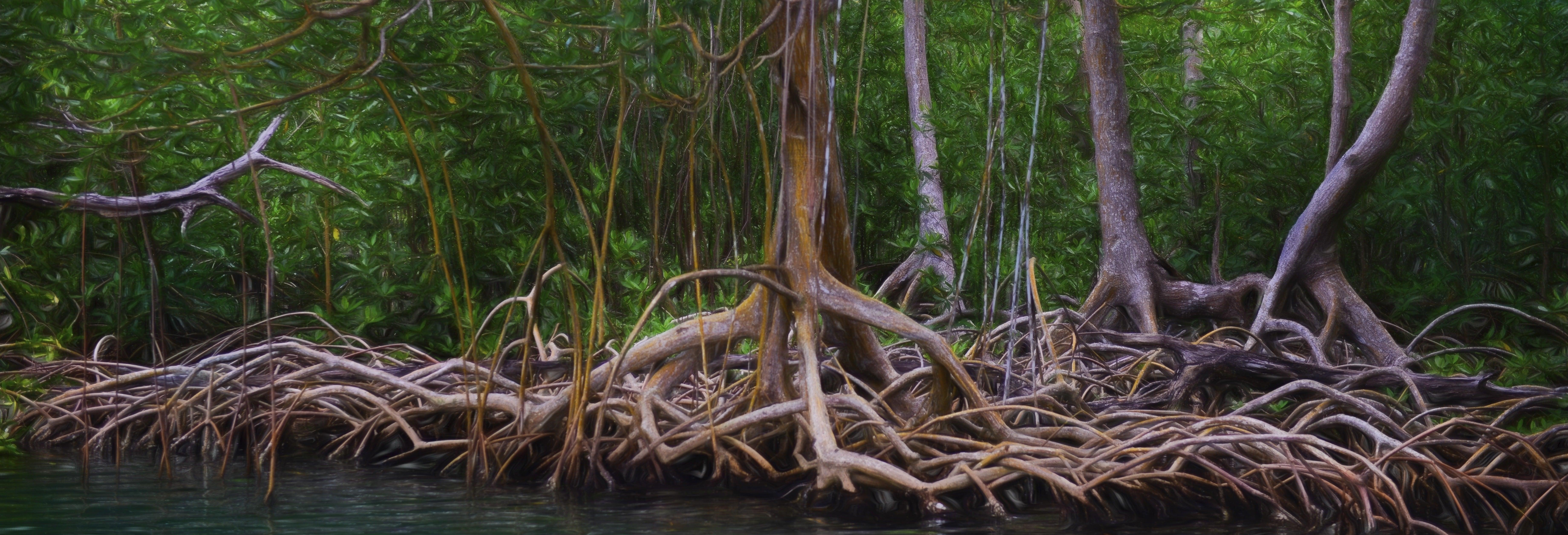 Senderismo por el Parque Nacional Los Haitises
