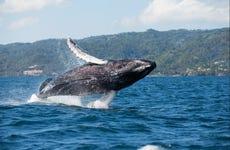 Avistamiento de ballenas + Cayo Levantado
