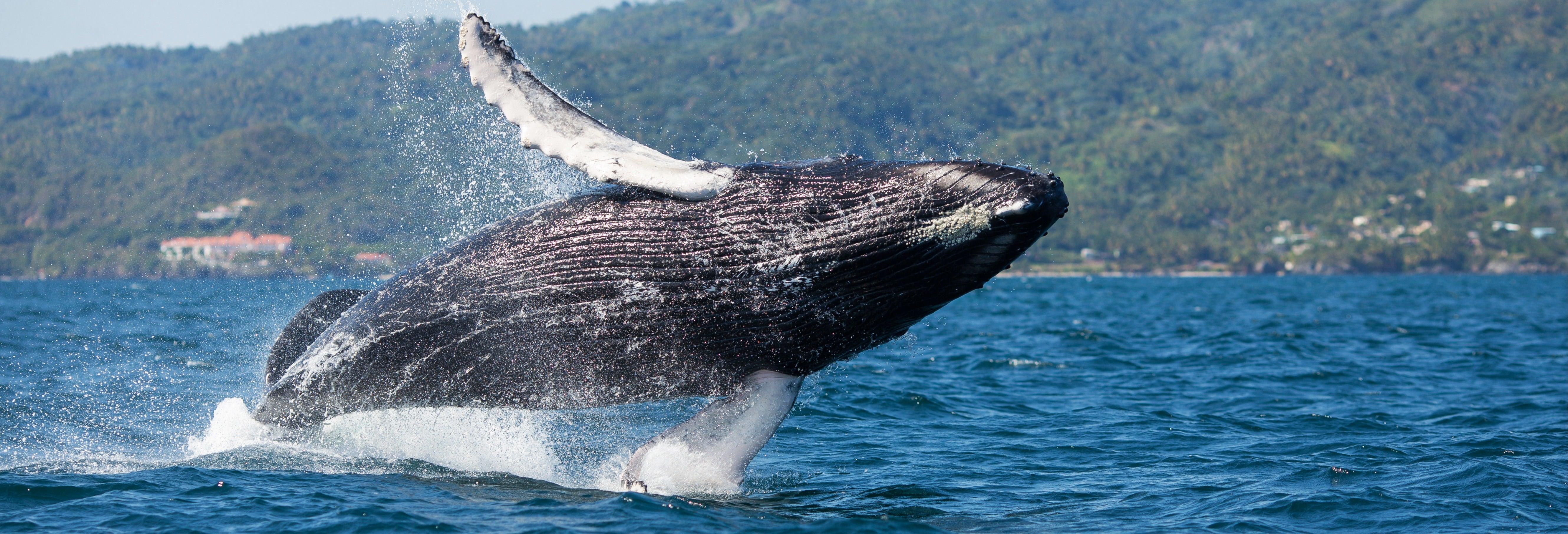 Avvistamiento di balene + Cayo Levantado