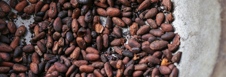 Tour del cacao por la Hacienda Esmeralda