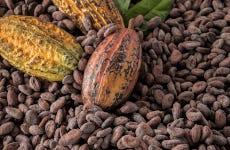 Tour del cacao y el tabaco