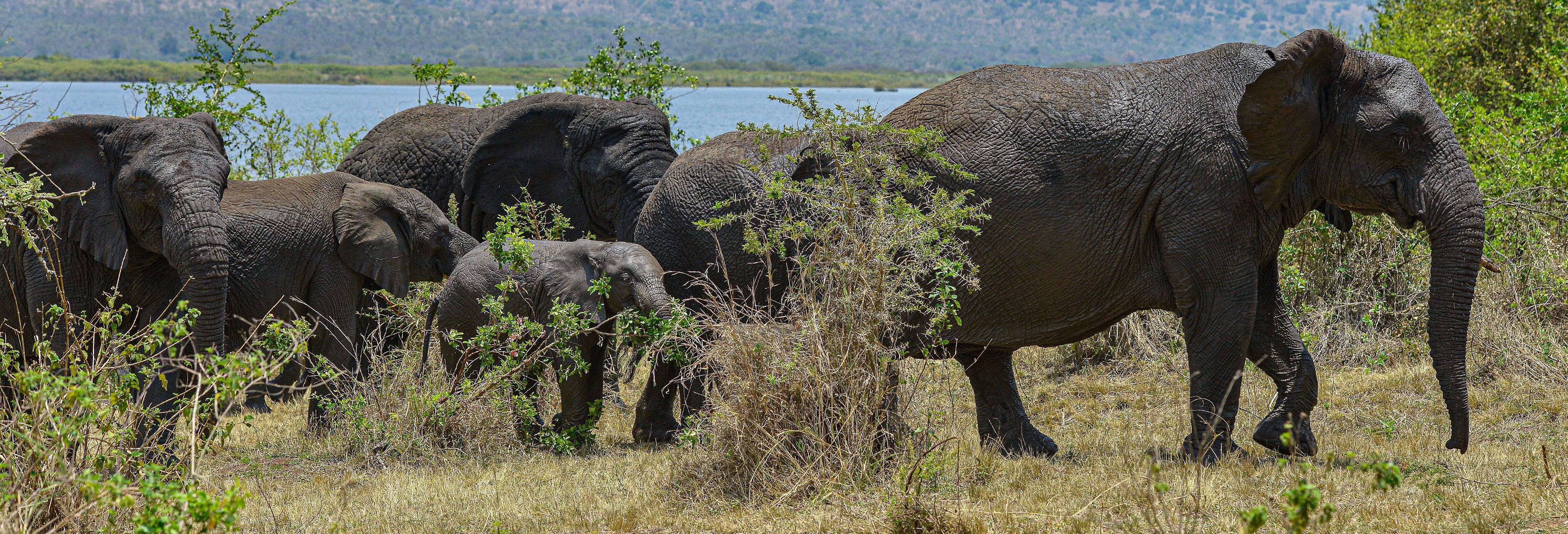 Safari por el Parque Nacional de Akagera y el lago Muhazi