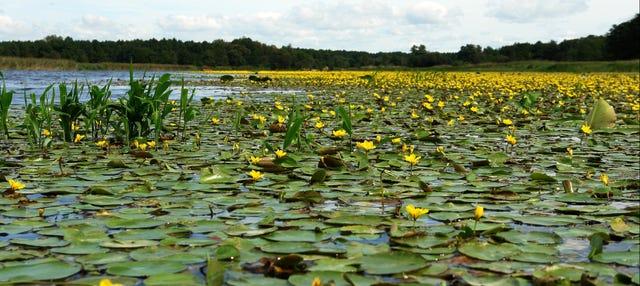 Black Sea & Danube Delta 2 Day Tour
