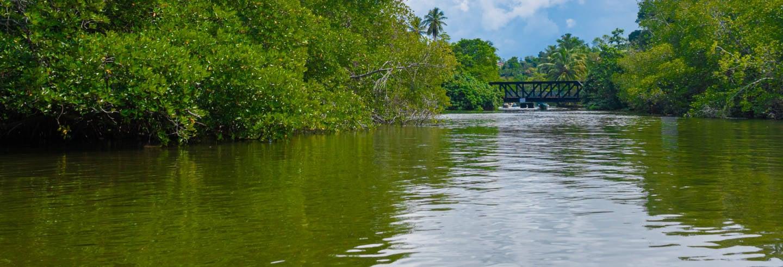 Excursión privada a Balapitiya + Criadero de tortugas de Kosgoda
