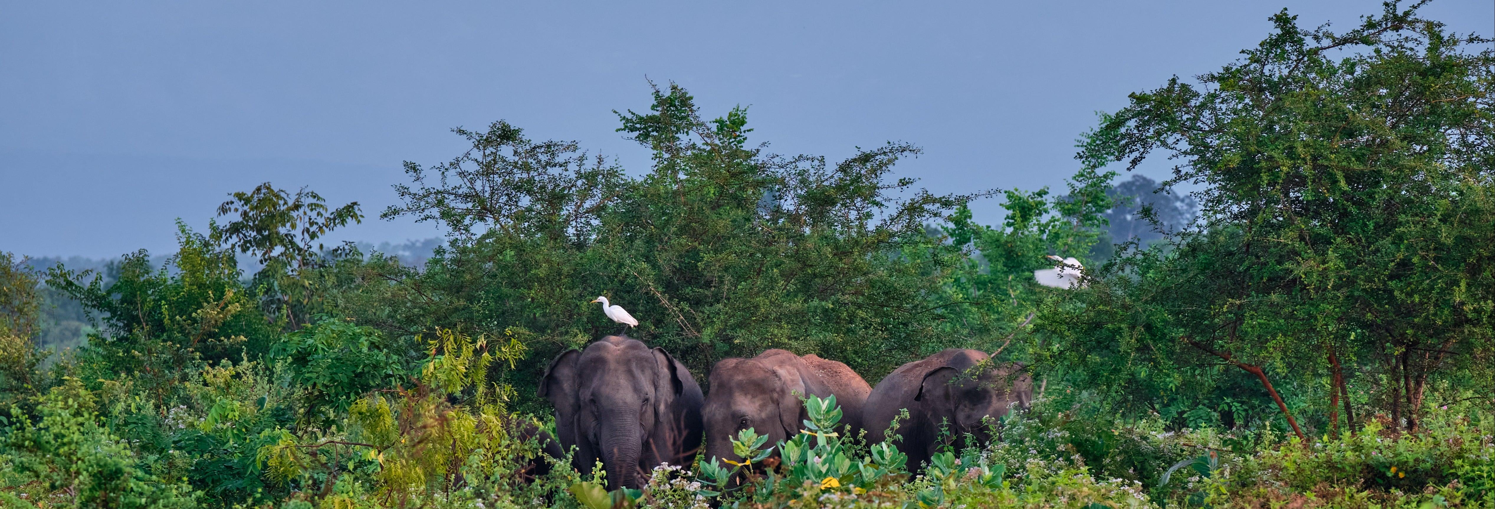 Excursión privada a Udawalawe