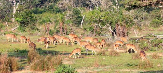 Safari al Parco Nazionale Wilpattu