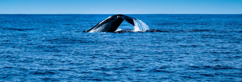 Avistamiento de cetáceos en Mirissa