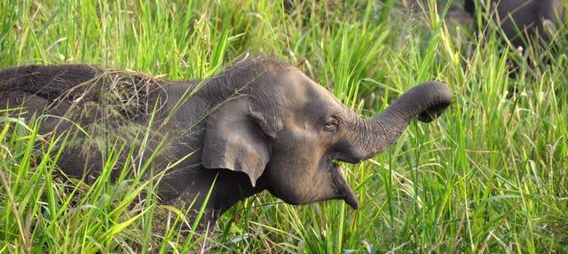 Safari por el Parque Ecológico de Hurulu