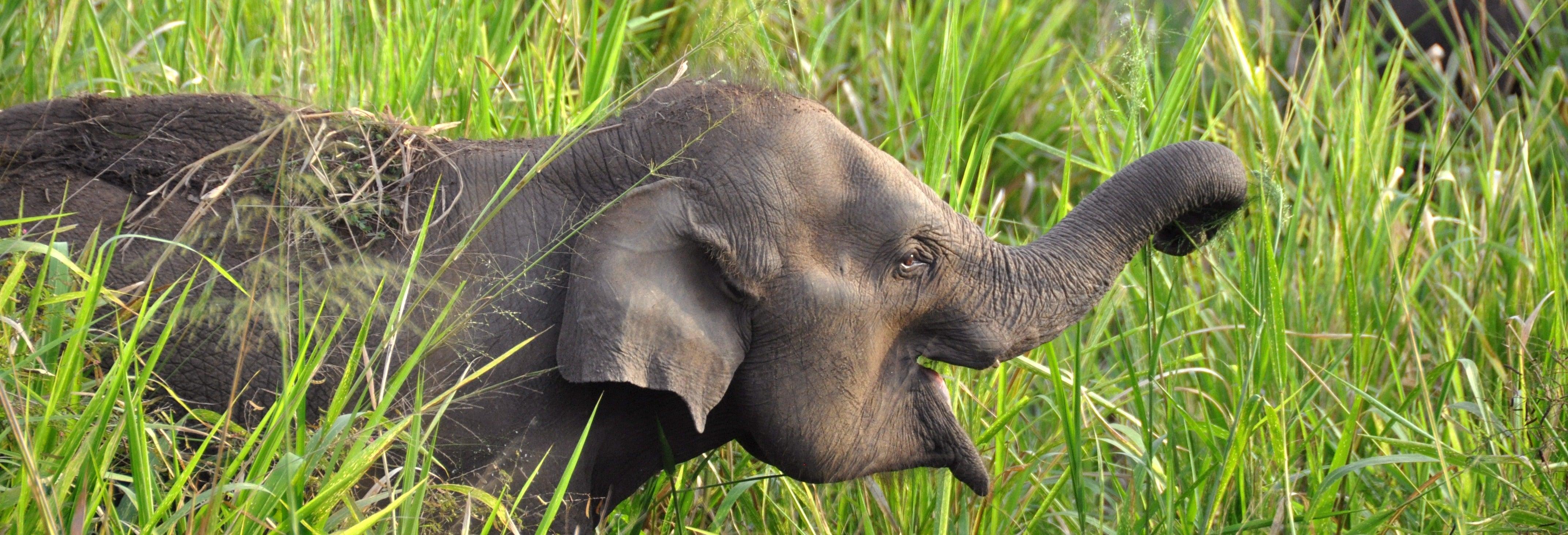 Safari dans le Parc écologique d'Hurulu