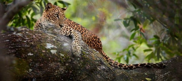 Safari por el Parque Nacional Wilpattu