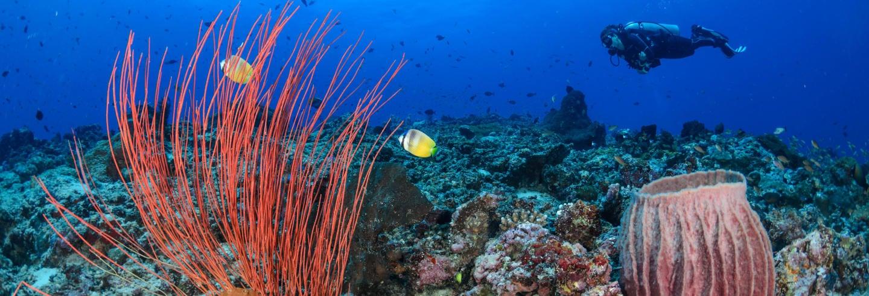Plongée à Trincomalee