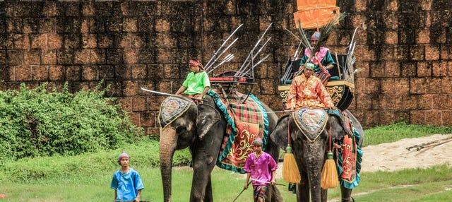 Espectáculo de elefantes y cocodrilos en el zoo