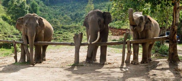 Tour del villaggio Karen in 2 giorni + Santuario degli elefanti