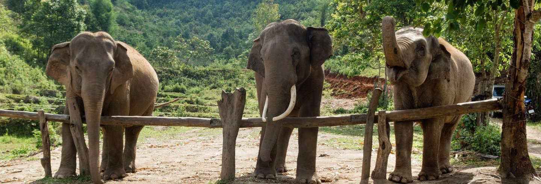 Tour de 2 días al pueblo Karen + Santuario de elefantes