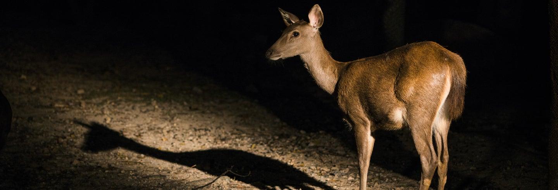 Biglietti per il Safari Night Zoo