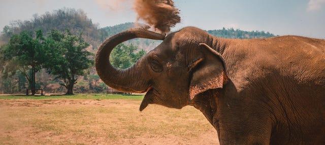 Escursione ad una riserva di elefanti