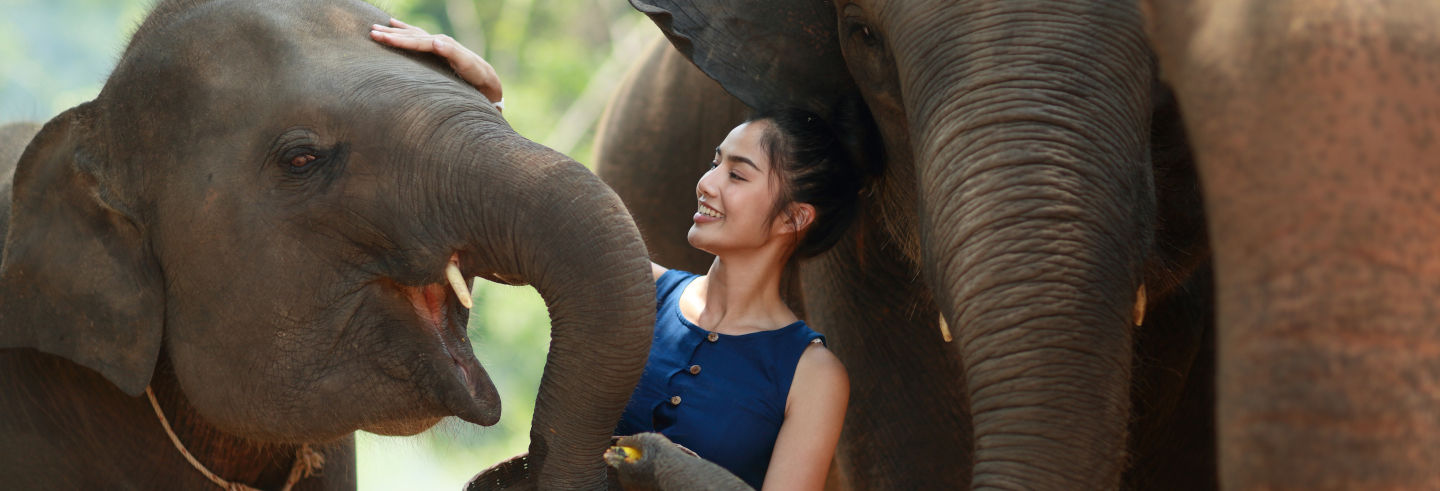 Elephant Sanctuary Chiang Mai Day Trip