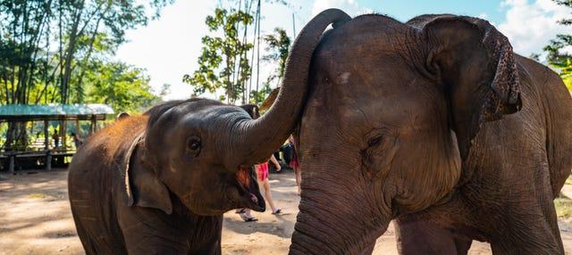Escursione al santuario degli elefanti + Rafting
