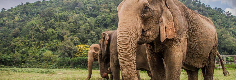 Tour de 2 días por Huay Khao Lip + Santuario de elefantes