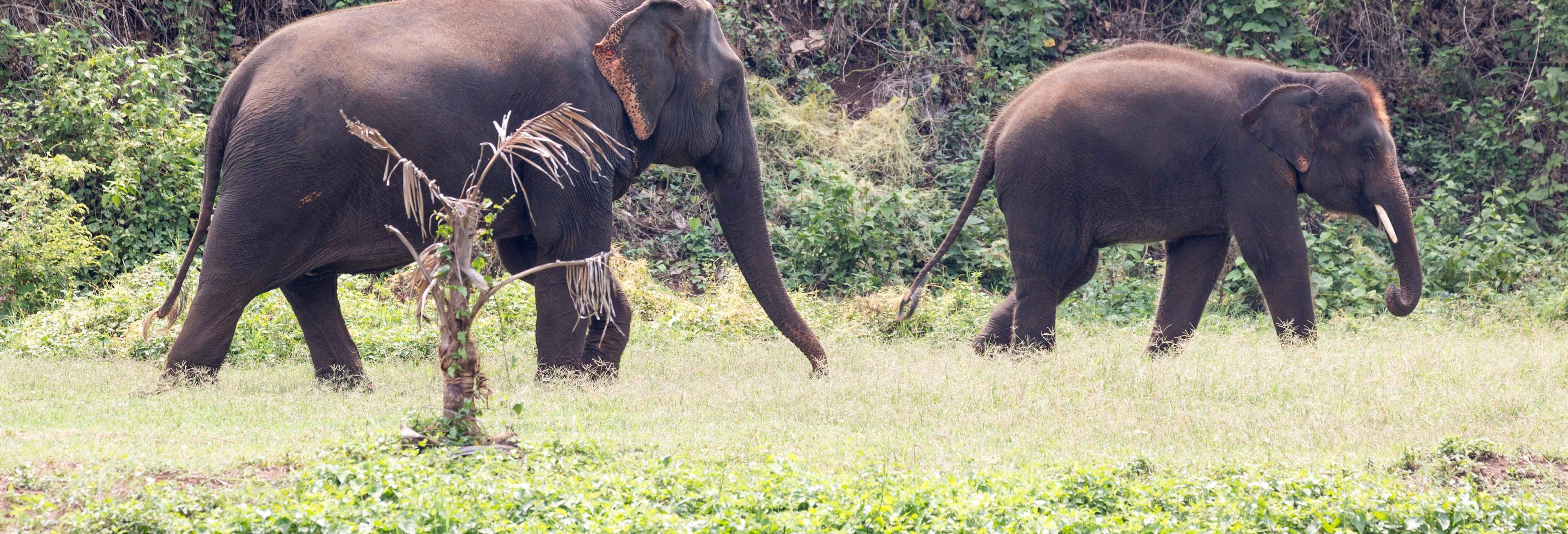 Excursión al santuario de elefantes de Khao Lak