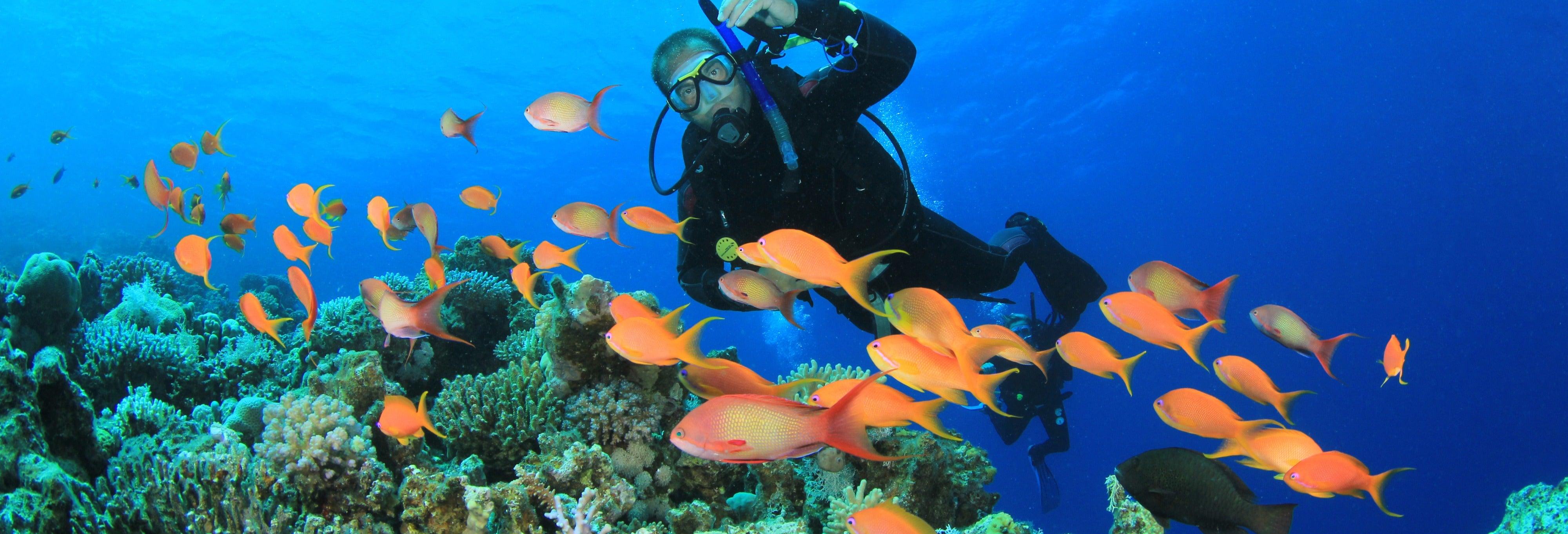 Plongée à Koh Rang