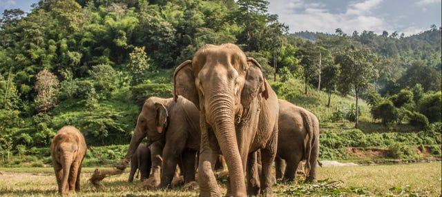 Visita ao santuário de elefantes