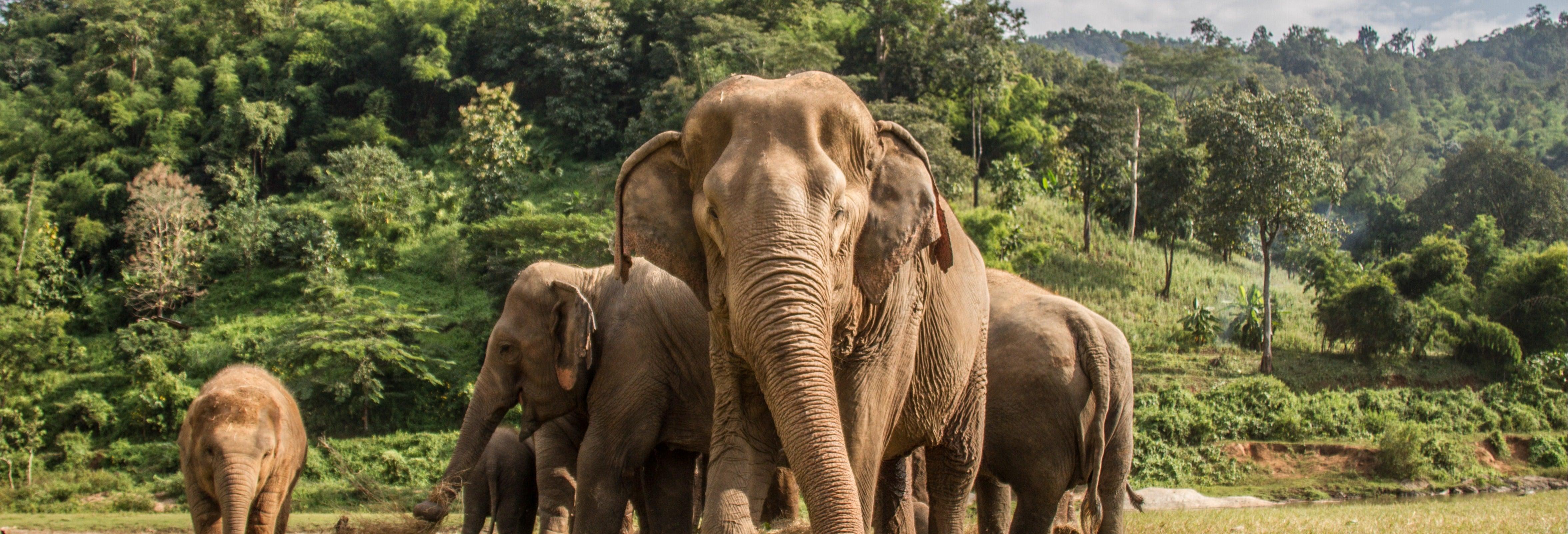 Visita al santuario de elefantes