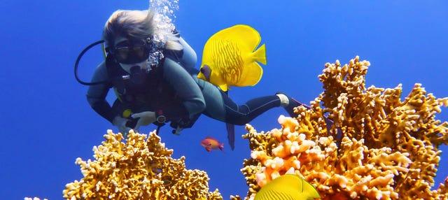 Buceo en la isla de Racha Yai