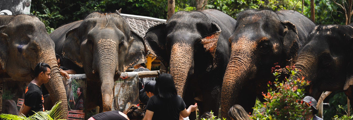 Escursione di 2 giorni all'Elephant Jungle Sanctuary