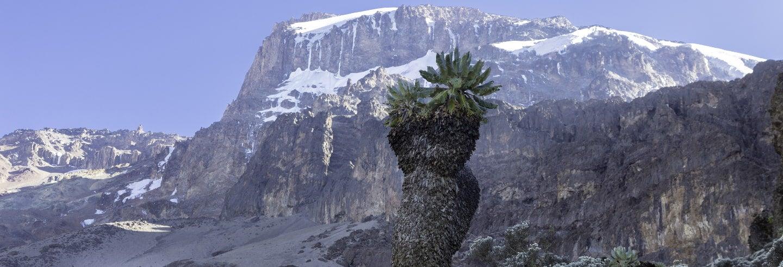 Mount Kilimanjaro Trek: 10 Days