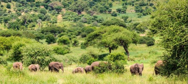 Safari de 6 jours au nord de la Tanzanie