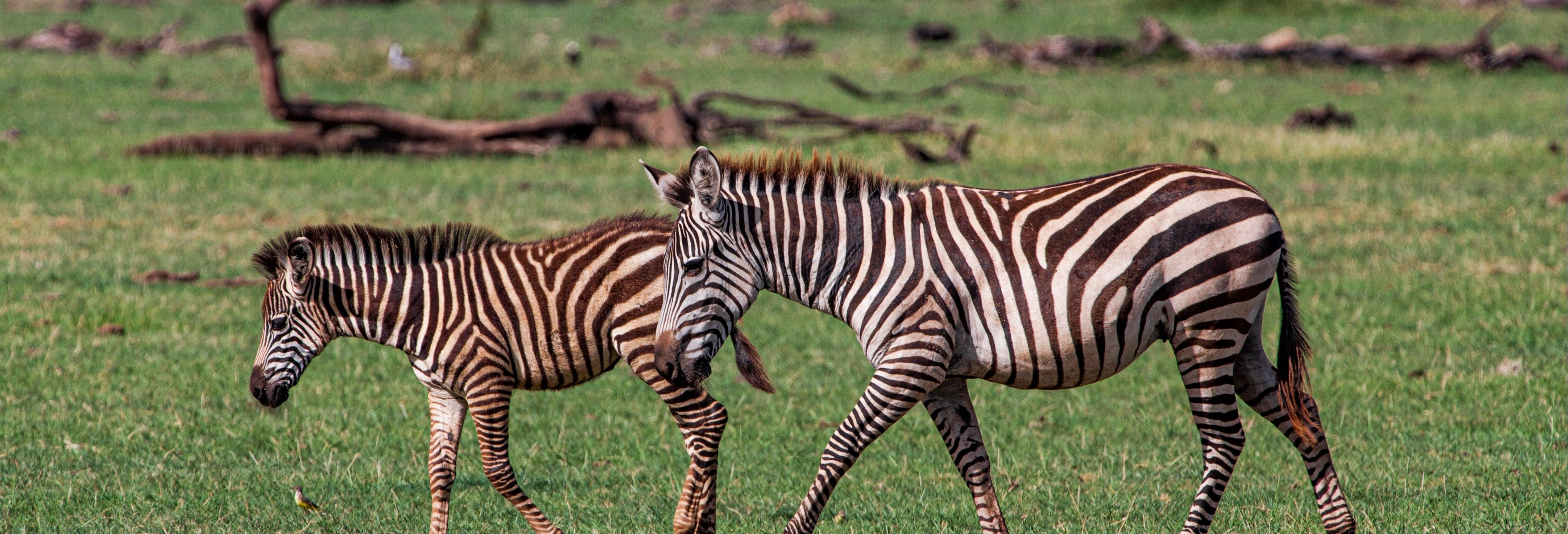 Safari de 8 días por el norte de Tanzania