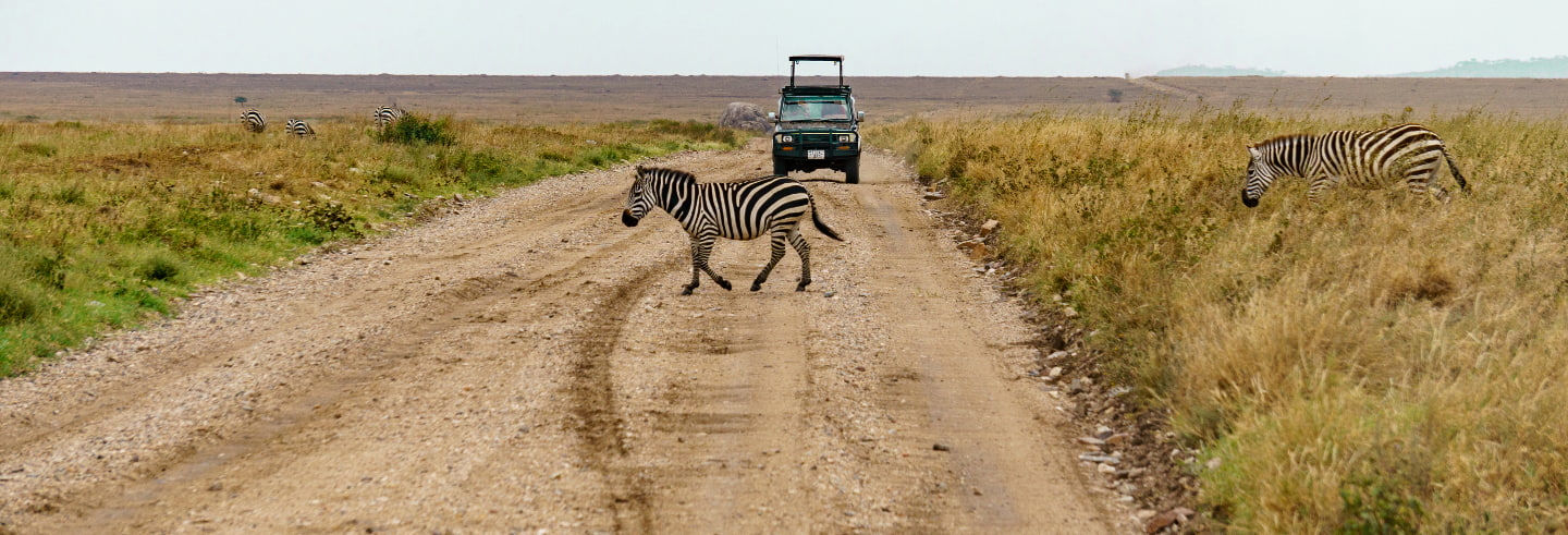 North Tanzania 8 Day Safari