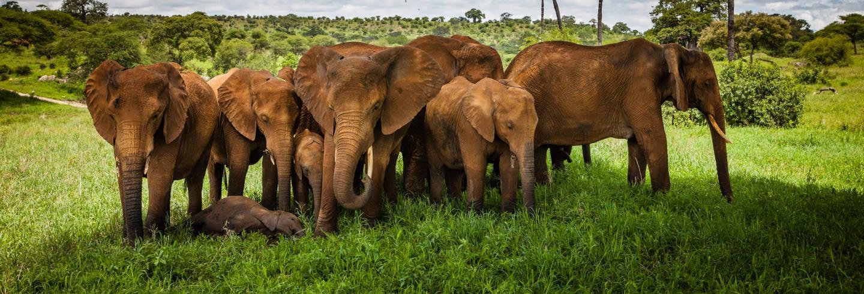 Safari nel Parco Nazionale di Tarangire