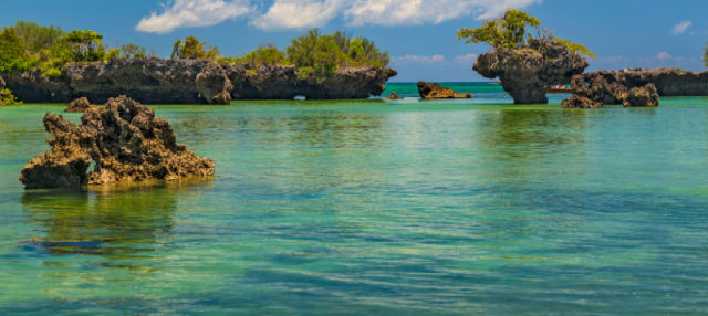 Excursion sur l'île Kwale