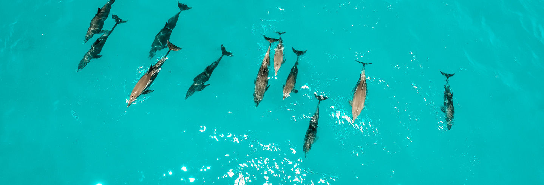 Nado privado con delfines en Zanzíbar