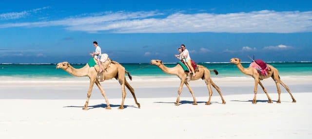 Paseo en camello por la laguna de Djerba