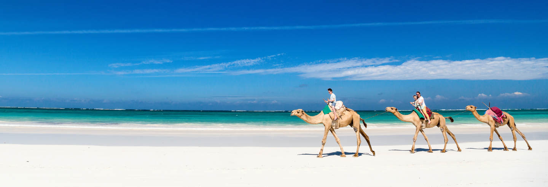 Camel Ride in Djerba Lagoon